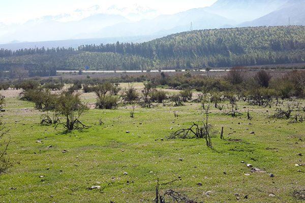 guadalupe01